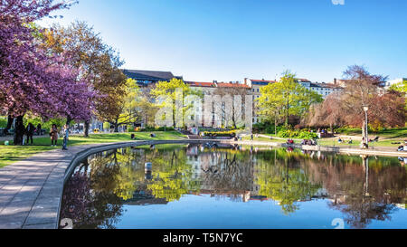 Blossom trees, Apartment buildings and reflection in pond of public park in Spring, Volkspark am Weinberg, Mitte, Berlin - Stock Image