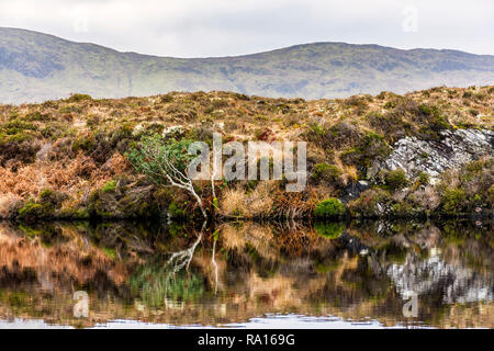 Loughros Point, County Donegal, Ireland. 29th December 2018. Russet, green and gold colours are reflected in a lake on wild bog land. Credit: Richard Wayman/Alamy Live News - Stock Image