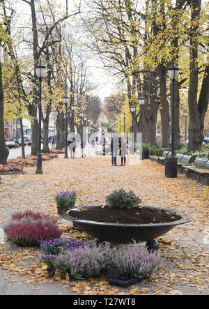 Autumn in the Norwegian capital Oslo, municipal flower pots in Karl Johan street being replanted with Erica and Aster flowers - Stock Image