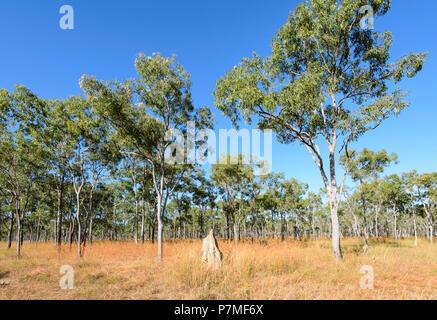 View of a termite mound in Cape York Peninsula, Far North Queensland, FNQ, QLD, Australia - Stock Image