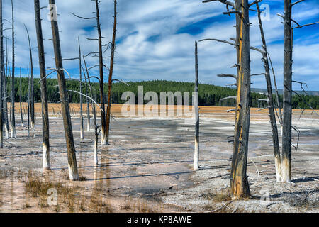 Yellowstone Upper Themal Basin, Wyoming, USA. Dead trees in the acidic thermal mud area - Stock Image