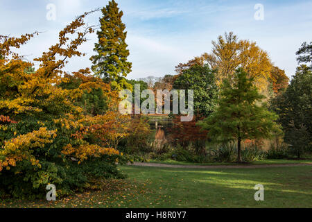 Autumn scene in Kew Gardens - Stock Image