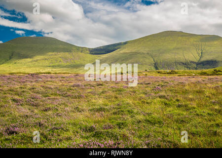 View towards Galtymore Mountain in the Galty Mountains range from the Glen of Aherlow, County Tipperary, Ireland - Stock Image