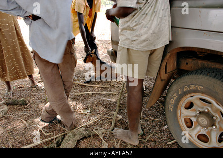 A goat is the subject of commercial bargaining Northern Ghana - Stock Image