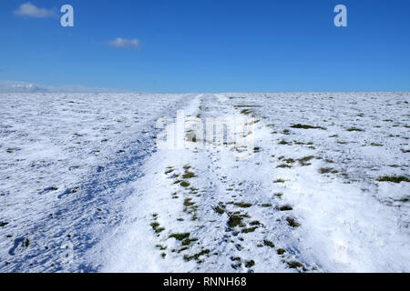 white snow covered flat land, above is a blue sky, popping up through the white snow are tuffs of green grass, the indent of a track runs up the middl - Stock Image