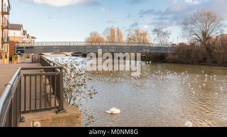The River Nene in central Peterborough, , Cambridgeshire, England, UK - Stock Image