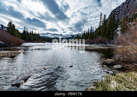 Ducks in a winter lake. - Stock Image