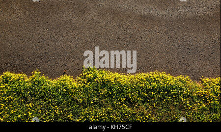 Pole aerial photo of pavement bordered by small yellow flowers and grass. - Stock Image