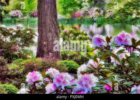 Rhododendrons in bloom with pond at Crystal Springs Rhododendron Gardens, Oregon - Stock Image