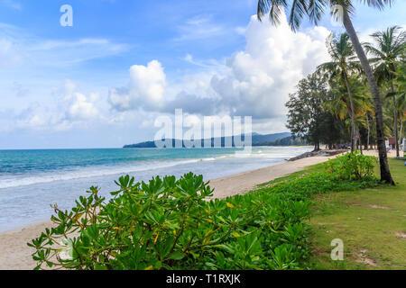 Palm tree on Bang Tao beach, Phuket, Thailand - Stock Image
