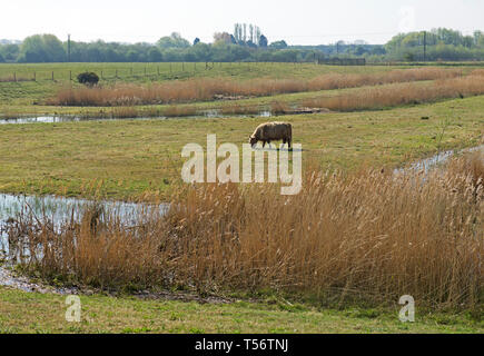 North Cave Wetlands nature reserve, East Yorkshire, England UK - Stock Image