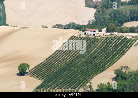 Typical patchwork colors of the countryside of Le Marche province in Italy - Stock Image