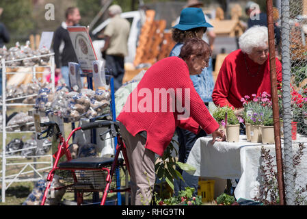 Plants for sale at a weekend farmer's local market at the village of Cargo between Orange and Canowindra in New South Wales' Central West, Australia - Stock Image