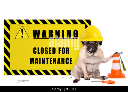 pug dog with yellow constructor safety helmet and warning sign with text closed for maintenance, isolated on white - Stock Image