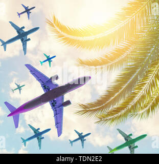 planes an Tropical trees background concept - Stock Image