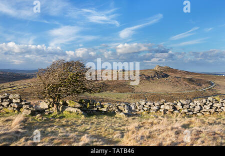 View to Haytor and Saddle Tor with hawthorn tree on Dartmoor, Devon - Stock Image