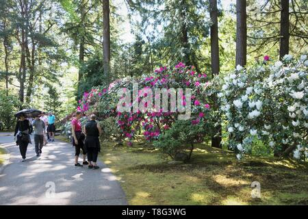 People admiring large rhododendron bushes at Portland Japanese Garden in Portland, Oregon, USA. - Stock Image
