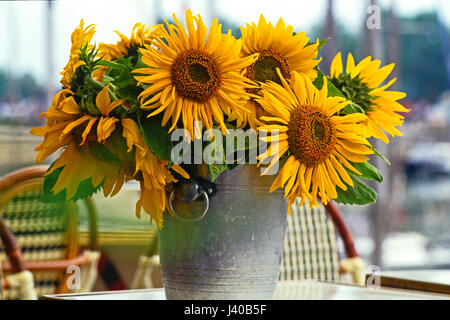 A cut flower display of colourful Sunflowers in a French cafe - Stock Image