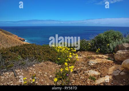 Coastal spring wild flowers bloom in Kalbarri National Park in Western Australia - Stock Image