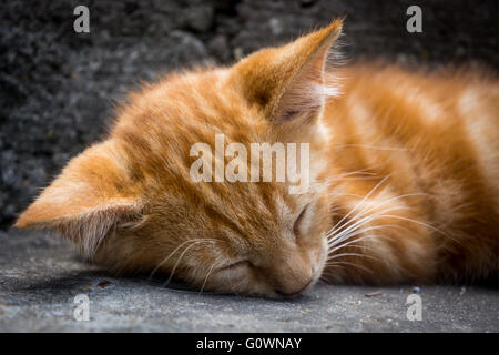 White ginger cat lying and sleeping on the grey stairs - Stock Image
