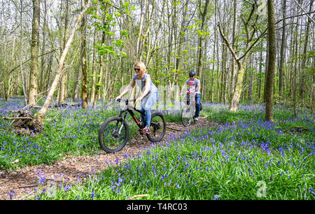 Brighton, UK. 18th Apr, 2019. The Meeker family enjoy a cycle ride on a warm sunny day through Stanmer Park in Brighton which is carpeted in bluebells as the weather is forecast to be warm and sunny over the Easter weekend with temperatures expected to reach over twenty degrees in some parts of the South East Credit: Simon Dack/Alamy Live News - Stock Image