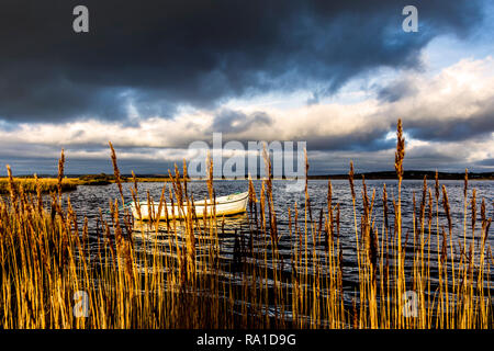 Ardara, County Donegal, Ireland. 30th December 2018. Dramatic light on the north-west coast as heavy stormclouds move to cover earlier sunny spells. A boat is seen through reedbeds. Credit: Richard Wayman/Alamy Live News - Stock Image