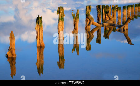 sixteen weather beaten old wooden posts in a flat calm mirror like water, the posts are reflected perfectly back on the water, the water is blue refle - Stock Image