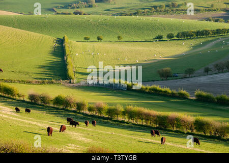 Spring afternoon on the South Downs in West Sussex, England. - Stock Image