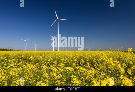 Rapeseed field with wind turbines against blue sky - Stock Image