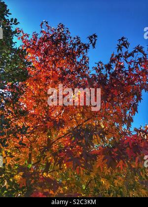 Autumn, leaves - Stock Image