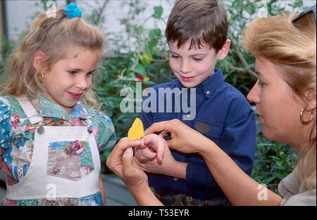 Tampa Florida Museum of Science & Industry hands on scientific exploration young visitors butterfly exhibit - Stock Image