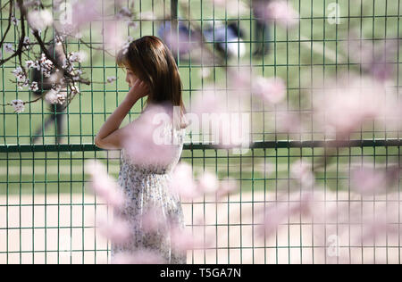 Harbin, China's Heilongjiang Province. 24th Apr, 2019. A girl is seen amid apricot flowers in Harbin Engineering University in Harbin, northeast China's Heilongjiang Province, April 24, 2019. Credit: Wang Song/Xinhua/Alamy Live News - Stock Image