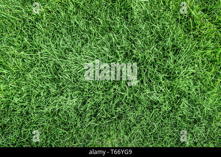Nature green grass background top view - Stock Image