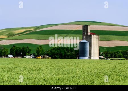 Grain elevators in a field near Prescott, Washington State, USA - Stock Image