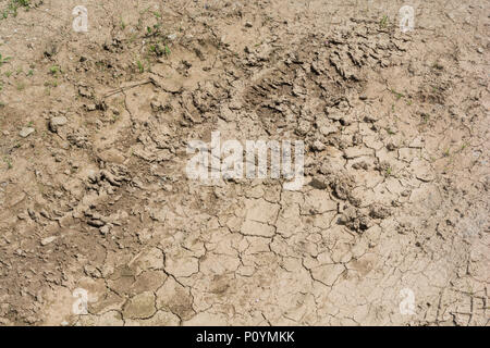 Patch of parched soil - metaphor for failing crops, crop losses, famine, starvation, heatwave concept, heatwave crops, water crisis Denmark drought. - Stock Image