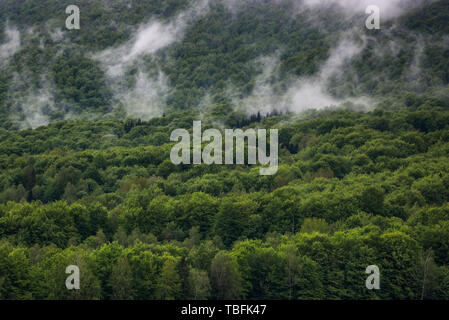 Moody clouds and fog over evergreen forest, Bieszczady Park in Poland. - Stock Image