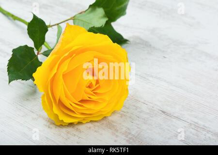 Beautiful yellow rose on white wooden background. - Stock Image