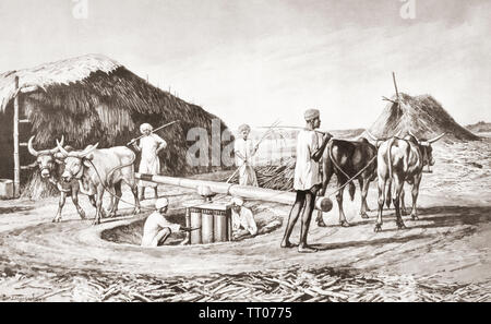 EDITORIAL ONLY  Method of crushing sugar cane in India in the 19th century.  After a work by J. Macfarlane. From a contemporary print c.1935. - Stock Image