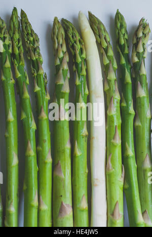 White and green asparagus on a white background - Stock Image