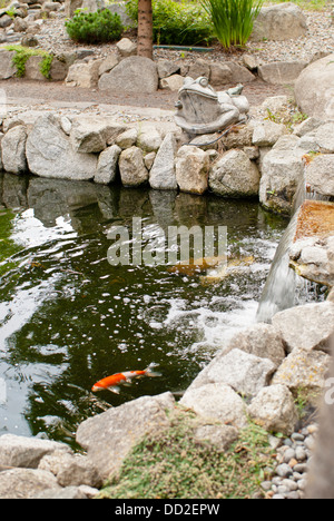 A Koi fish glides through the pond at Koi Gardens, Spokane, Washington State, USA. - Stock Image