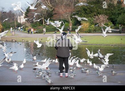 An elderly woman stands alone feeding birds in Regent's Park, London, United Kingdom - Stock Image