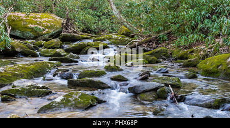 Large, moss-covered rocks in a mountain stream, bordered with mountain laurel. - Stock Image