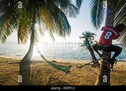 man climbing palm tree on Baki Island, th Turtle Islands, Sierra Leone. - Stock Image