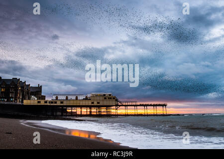 Aberystwyth Wales UK, 13 Jan 2019 At sunset on a day of cold blustery weather, flocks of tens  of thousands of  tiny starlings   fly in huge 'murmurations' in the sky above Aberystwyth as they return from their daily feeding grounds to roost for the night on the forest  of cast iron legs underneath  the town's Victorian seaside pier.  Aberystwyth is one of the few urban roosts in the country and draws people from all over the UK to witness the spectacular nightly displays.  photo credit Keith Morris/Alamy Live News Credit: keith morris/Alamy Live News - Stock Image