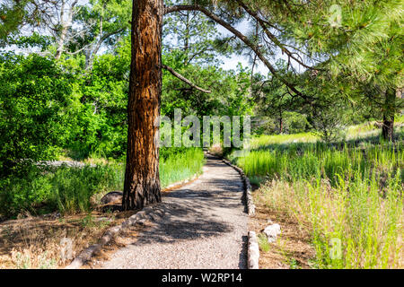 Scenery of tree and path at Main Loop trail in Bandelier National Monument in New Mexico during summer in Los Alamos - Stock Image