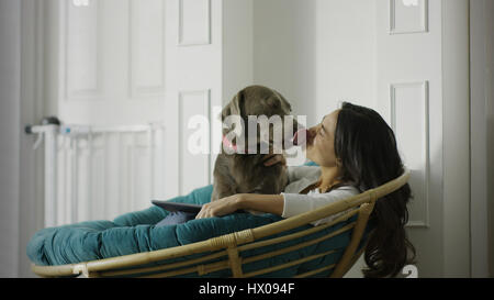 Low angle view of pet dog licking woman using digital tablet and sitting in chair - Stock Image