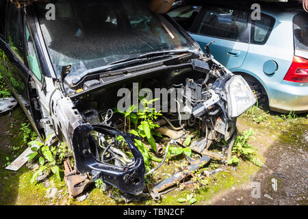 Wild plants including dock (Rumex) are growing in the empty engine bay of a scrapped car at the bottom of a pile - Stock Image