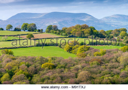 Fields and trees in spring, Mynydd Llangatwg, Powys, Wales, UK, in the Brecon Beacons National Park – Black Mountains in the background. - Stock Image