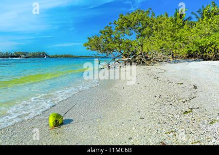 Coconut at Lido Keys, Sarasota - Stock Image