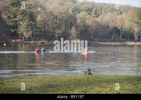 Four males out rowing on the Lake at Trentham Gardens Staffordshire England UK - Stock Image